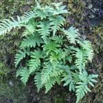 """""""Ferns"""" by MartinAqua"""