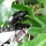 """Beetle"" by MartinAqua"