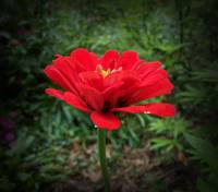 Pretty Red Flower
