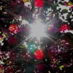 """""""light through flowers"""" by jammingene"""