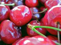 Cherries with Select Stems