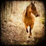 """Horse"" by carlosRestrepo"