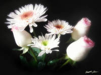 White Chrysanthemums and Roses 6