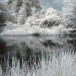 """Infrared Pond"" by photocatphoto"