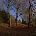 """""""Kelvingrove Park Trees"""" by Areskoug"""