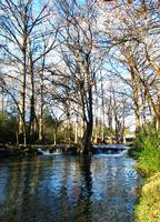 Cypress Creek IV