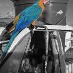 """""""Perched Macaw"""" by robbdee40"""