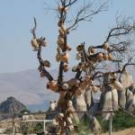 """Turkish Pottery Tree"" by raftergood"