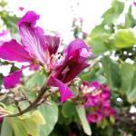 """""""flower"""" by opadpro"""