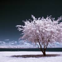 """a winter summer - infrared tree landscape"" by miir"