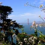 """Golden Gate Bridge with Flowers"" by Groecar"
