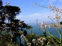 Golden Gate Bridge with Flowers by Carol Groenen
