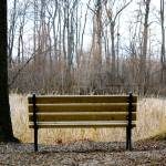 """Bench"" by MKreidler"