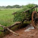 """Monsoon Mud Wagon"" by LightOffering"