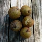 """""""pears"""" by emburke"""