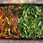 """peppers & kaffir leaves"" by emburke"