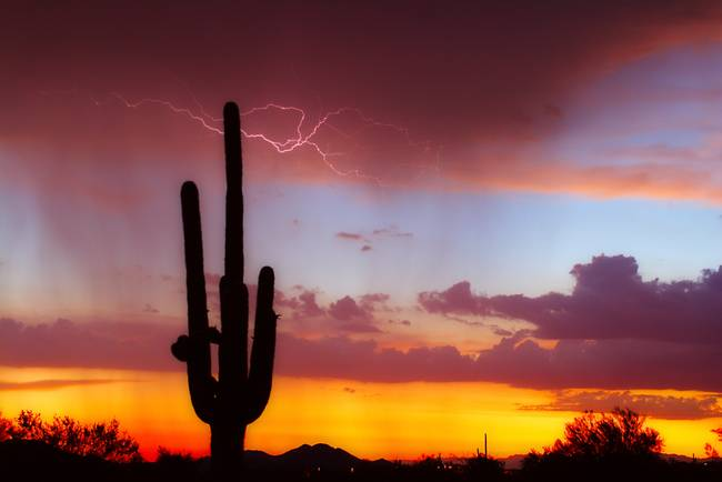 Lightning--Saguaro-Sunset_art.jpg