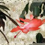 """Penny Postcard Japonaise"" by RCdeWinter"
