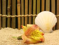 111 flower and shell