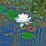"""Lily pond"" by AlexisM"