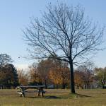 """Tree in the Park"" by choose2see"