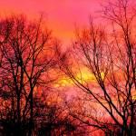 """""""winter morning"""" by jammingene"""