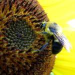"""""""pollen world"""" by oceanaria"""