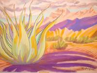 Agave in the desert
