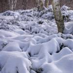 """Snow covered Shrubs"" by ZeipekisPhotography"