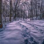 """Snowy Trail"" by ZeipekisPhotography"