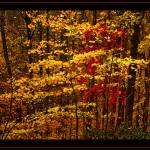 """Blue Ridge Autumn"" by DaveCarr"