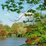 """""""Japanese Garden II"""" by RamonFernandez"""