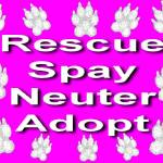 """Rescue, Spay, Neuter, Adopt"" by byteland"