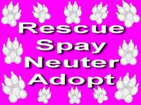 Rescue, Spay, Neuter, Adopt