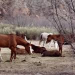 """horses"" by Deni"