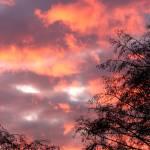 """""""Pastel Sky Behind Lace Trees"""" by StarliteWonderImaging"""