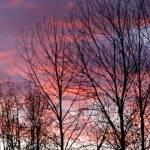 """""""Purple Silhouette"""" by StarliteWonderImaging"""