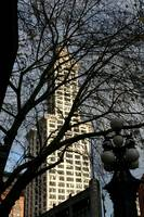 Smith Tower Behind The Trees