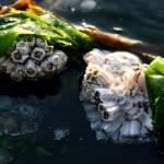 """""""Blanketed By Seaweed"""" by StarliteWonderImaging"""