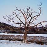 """""""tree"""" by denzil47"""