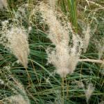"""Grass"" by iggyfan"