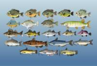 Freshwater Fish, Group