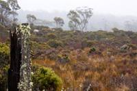 Tasmanian Highlands
