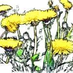 """""""Dandelions"""" by Cindisart"""