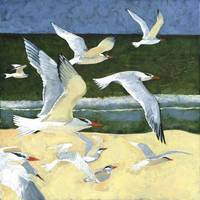 Florida Terns