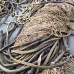 """Seaweed Snarl"" by garlickn"