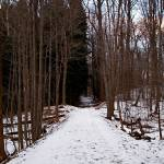 """Dark Path"" by marcmmp"