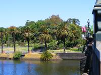 Palm trees and Yarra River