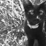 """Black Cat in B&W"" by hdurham0490"