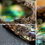 """""""abalone study"""" by method_of_least_squares"""